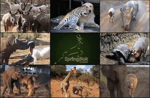celebrate-unusual-animal-friendship-day-at-springbok-casino